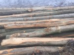 Spalili im i kuću i njivu a sada posjekli i šumu (2)