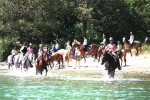 Konji na ranču Barba Tone (4)
