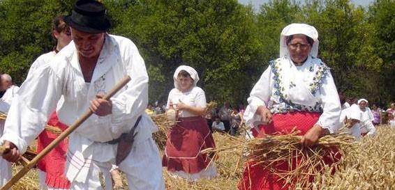 """Tradicijska priredba """"Kruh naš svagdašnji – žetva i vršidba u prošlosti"""". Foto: Hina"""