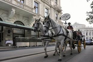 Zvuk konjskih kopita uskoro bi mogao iščeznuti iz austrijske prijestolnice. Foto: Hna