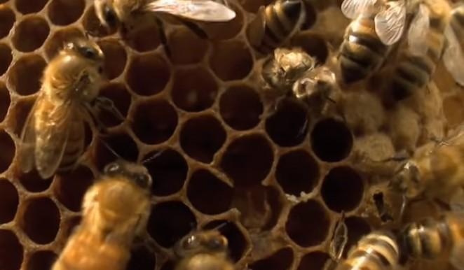 Članice Europske unije zabranile još jedan pesticid, opasan je za ljude i pčele