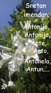 Sv. Ante