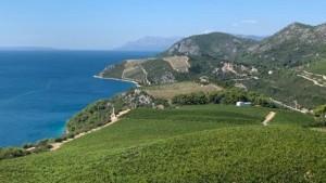 Pelješko vinogorje / Foto: Fenix