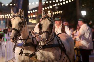 konji vrani
